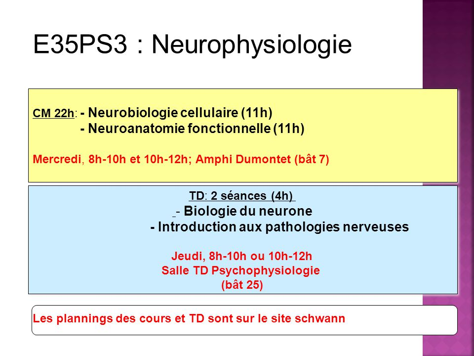 LICENCE 2 Volume horaire: 26 heures CM 22h: - Neurobiologie cellulaire (11h) - Neuroanatomie fonctionnelle (11h) Mercredi, 8h-10h et 10h-12h; Amphi Dumontet (bât 7) CM 22h: - Neurobiologie cellulaire (11h) - Neuroanatomie fonctionnelle (11h) Mercredi, 8h-10h et 10h-12h; Amphi Dumontet (bât 7) TD: 2 séances (4h) - Biologie du neurone - Introduction aux pathologies nerveuses Jeudi, 8h-10h ou 10h-12h Salle TD Psychophysiologie (bât 25) TD: 2 séances (4h) - Biologie du neurone - Introduction aux pathologies nerveuses Jeudi, 8h-10h ou 10h-12h Salle TD Psychophysiologie (bât 25) Les plannings des cours et TD sont sur le site schwann E35PS3 : Neurophysiologie