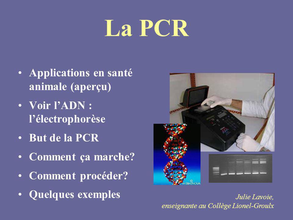 La PCR Applications en santé animale (aperçu) Voir lADN : lélectrophorèse But de la PCR Comment ça marche? Comment procéder? Quelques exemples Julie L