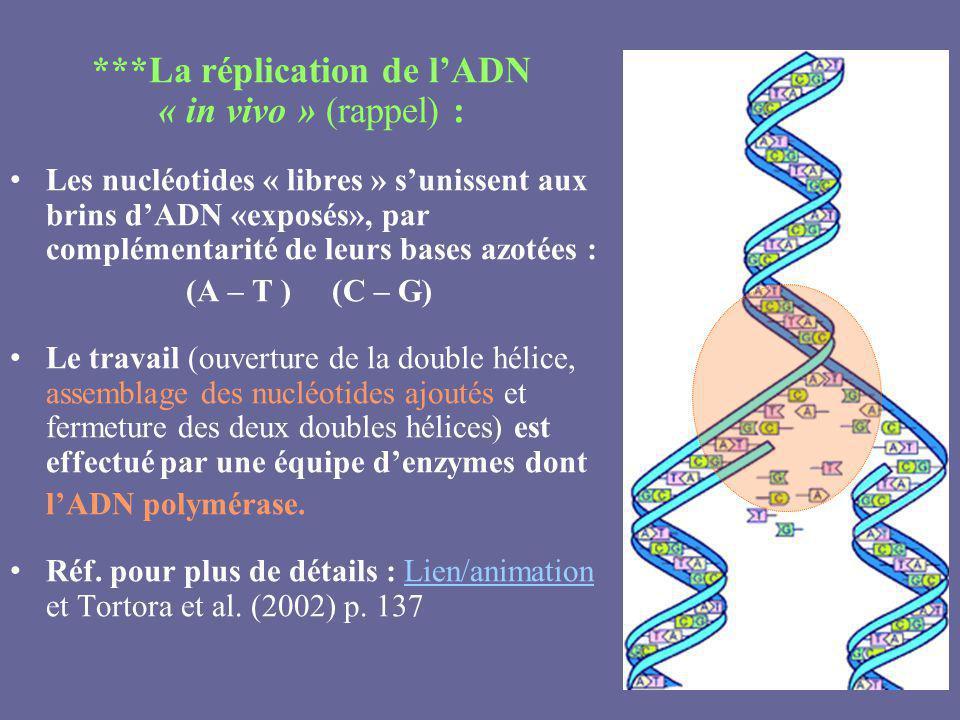 ***La réplication de lADN « in vivo » (rappel) : Les nucléotides « libres » sunissent aux brins dADN «exposés», par complémentarité de leurs bases azo