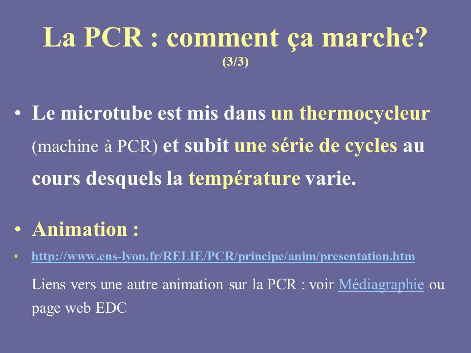 Le microtube est mis dans un thermocycleur (machine à PCR) et subit une série de cycles au cours desquels la température varie. Animation : http://www