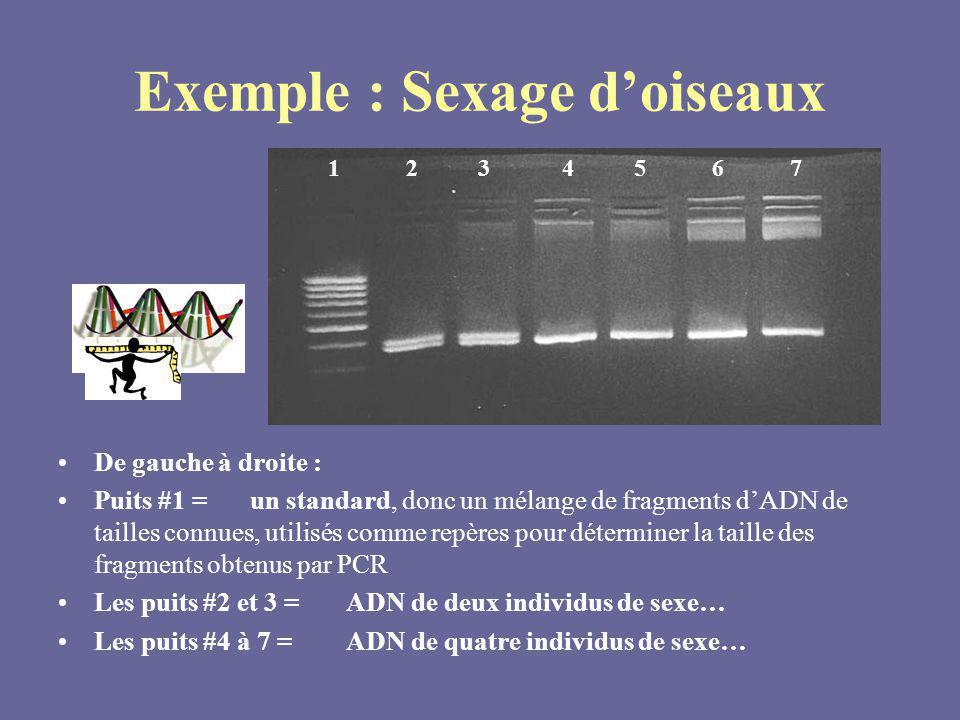 Exemple : Sexage doiseaux De gauche à droite : Puits #1 = un standard, donc un mélange de fragments dADN de tailles connues, utilisés comme repères po