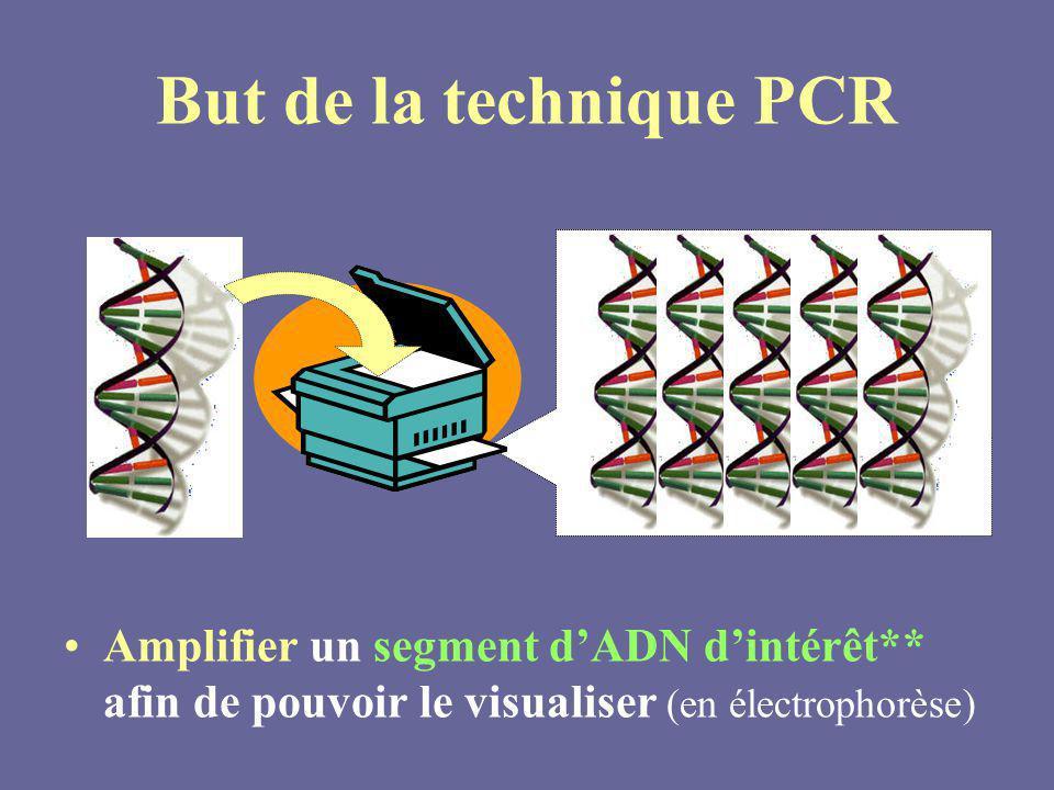 But de la technique PCR Amplifier un segment dADN dintérêt** afin de pouvoir le visualiser (en électrophorèse)