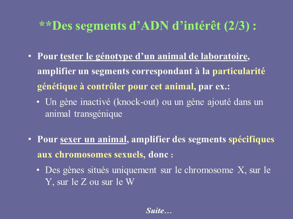 **Des segments dADN dintérêt (2/3) : Pour tester le génotype dun animal de laboratoire, amplifier un segments correspondant à la particularité génétiq