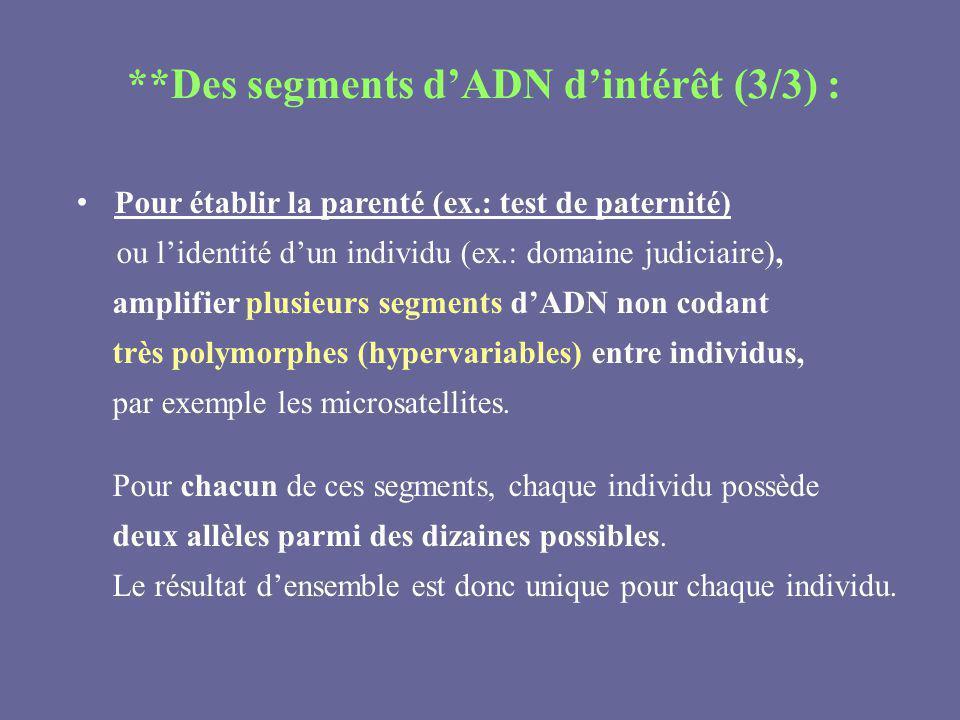 **Des segments dADN dintérêt (3/3) : Pour établir la parenté (ex.: test de paternité) ou lidentité dun individu (ex.: domaine judiciaire), amplifier p