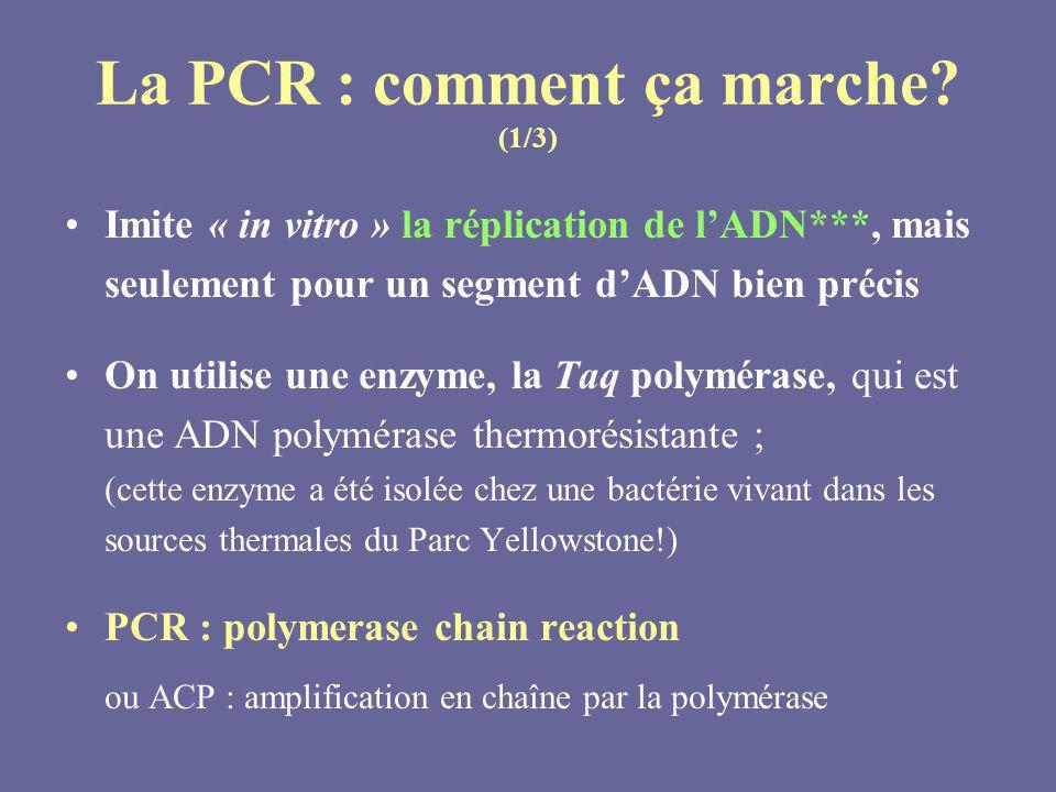 Imite « in vitro » la réplication de lADN***, mais seulement pour un segment dADN bien précis On utilise une enzyme, la Taq polymérase, qui est une AD