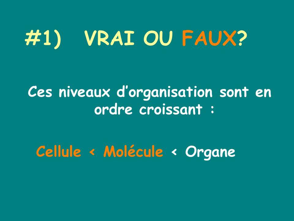 #1)VRAI OU FAUX Ces niveaux dorganisation sont en ordre croissant : Cellule < Molécule < Organe