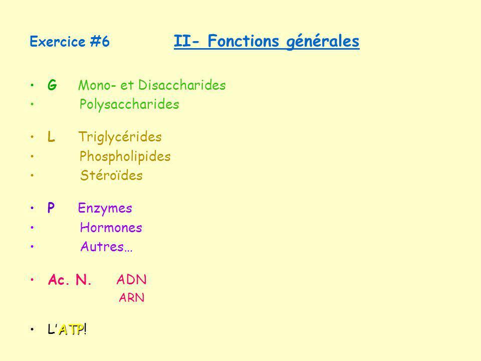 Exercice #6 II- Fonctions générales GMono- et Disaccharides Polysaccharides LTriglycérides Phospholipides Stéroïdes P Enzymes Hormones Autres… Ac. N.