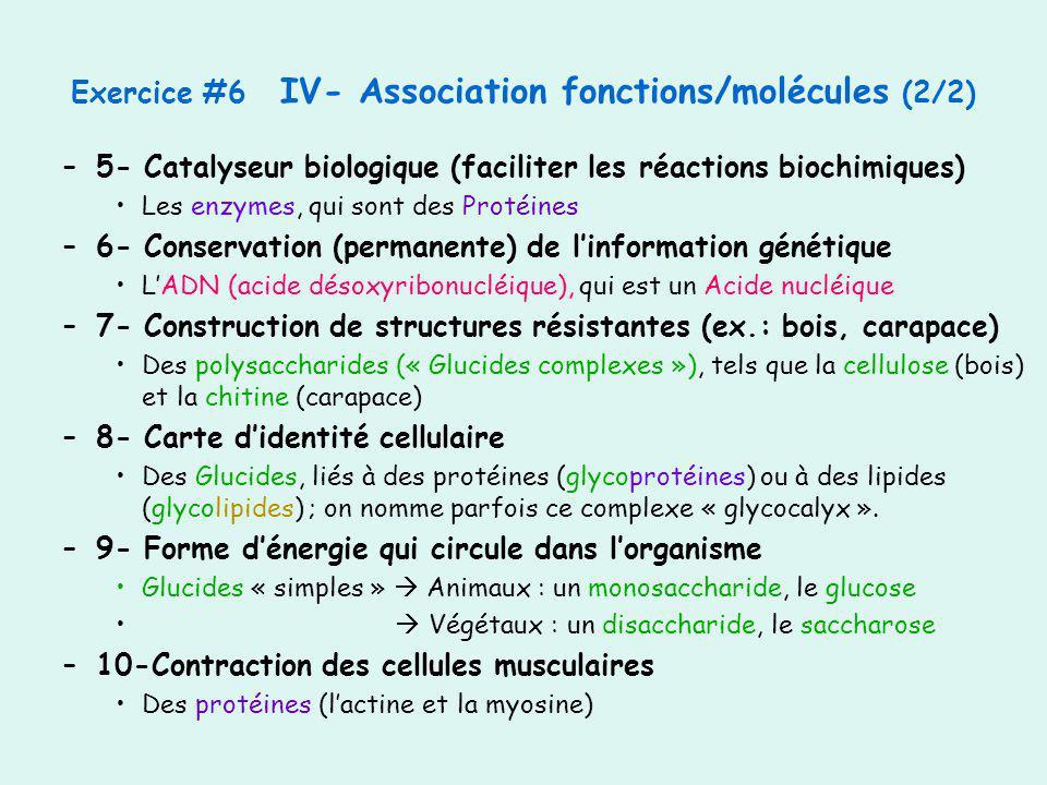 –5- Catalyseur biologique (faciliter les réactions biochimiques) Les enzymes, qui sont des Protéines –6- Conservation (permanente) de linformation gén