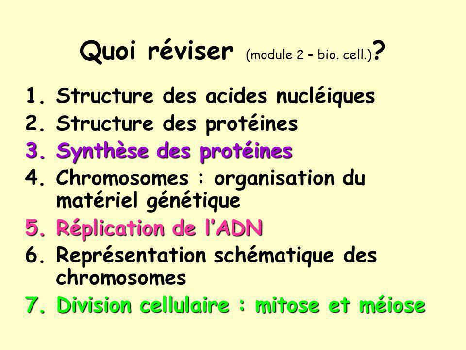 Quoi réviser (module 2 – bio. cell.) ? 1.Structure des acides nucléiques 2.Structure des protéines 3.Synthèse des protéines 4.Chromosomes : organisati