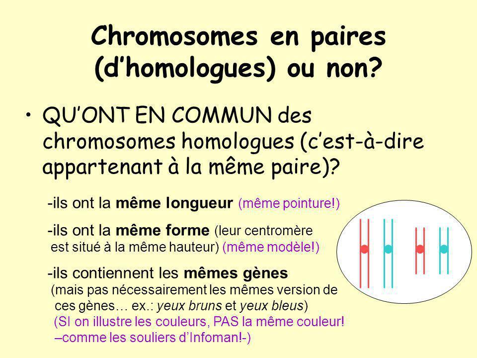 Chromosomes en paires (dhomologues) ou non.