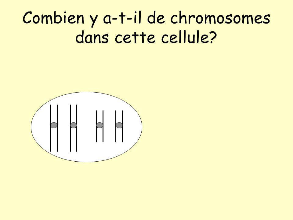 Combien y a-t-il de chromosomes dans cette cellule?