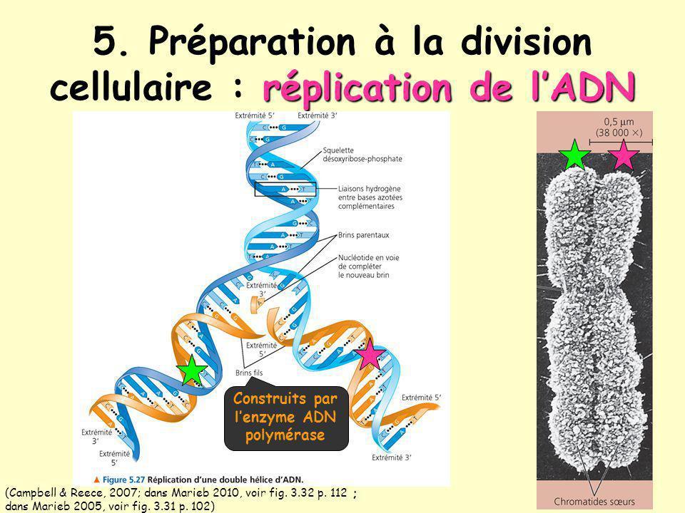 réplication de lADN 5. Préparation à la division cellulaire : réplication de lADN (Campbell & Reece, 2007; dans Marieb 2010, voir fig. 3.32 p. 112 ; d
