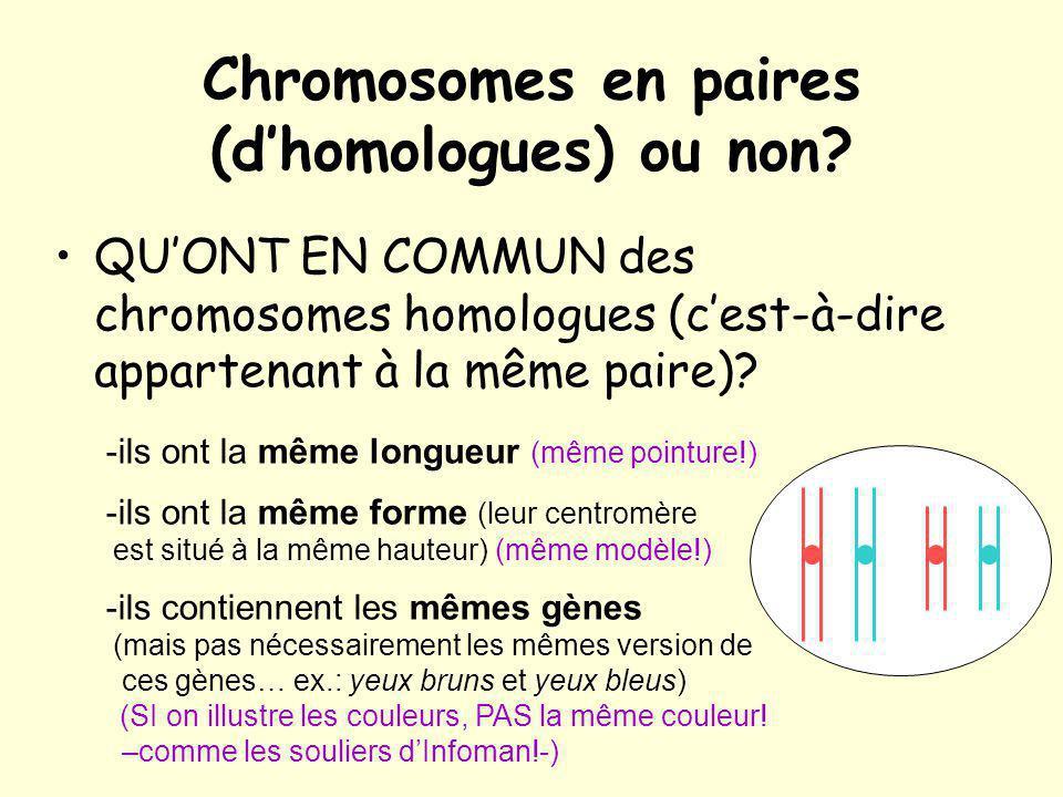 Chromosomes en paires (dhomologues) ou non? QUONT EN COMMUN des chromosomes homologues (cest-à-dire appartenant à la même paire)? -ils ont la même lon