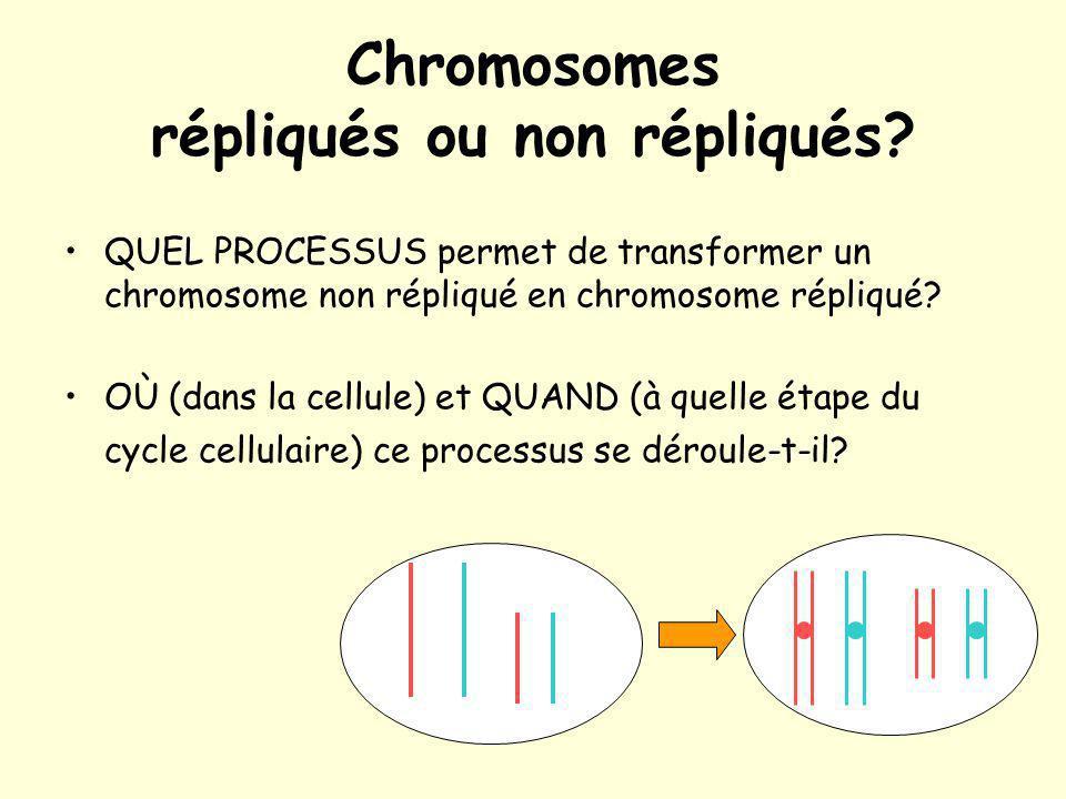 Chromosomes répliqués ou non répliqués? QUEL PROCESSUS permet de transformer un chromosome non répliqué en chromosome répliqué? OÙ (dans la cellule) e