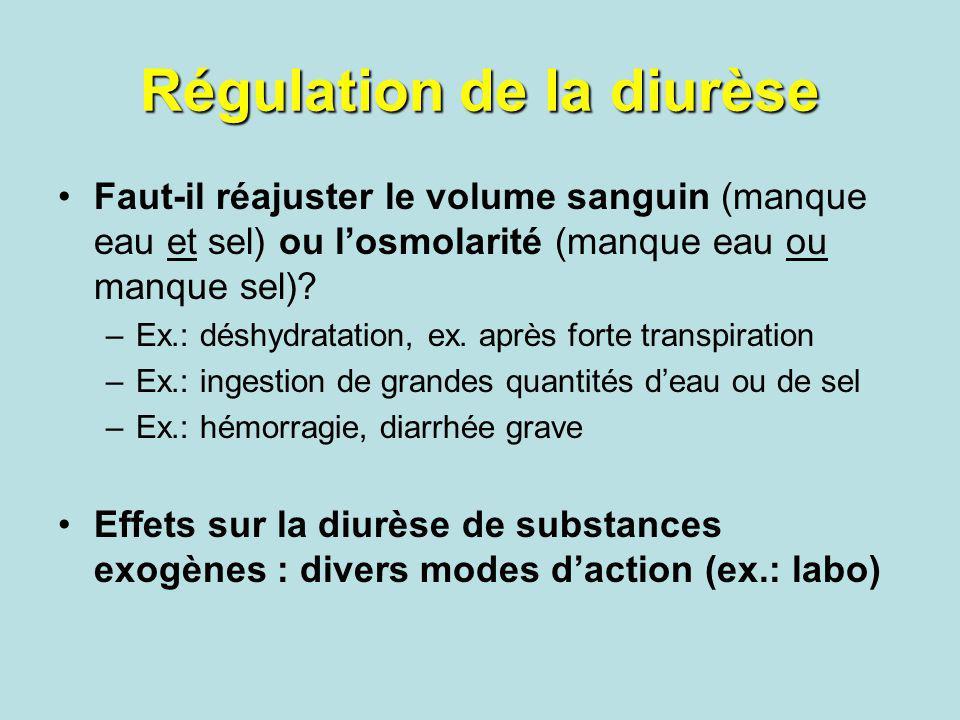 Régulation de la diurèse Faut-il réajuster le volume sanguin (manque eau et sel) ou losmolarité (manque eau ou manque sel)? –Ex.: déshydratation, ex.