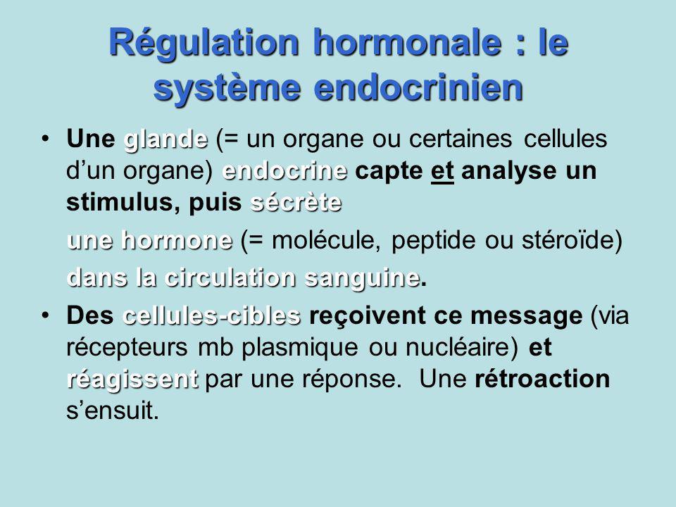 Régulation hormonale : le système endocrinien glande endocrine sécrèteUne glande (= un organe ou certaines cellules dun organe) endocrine capte et ana