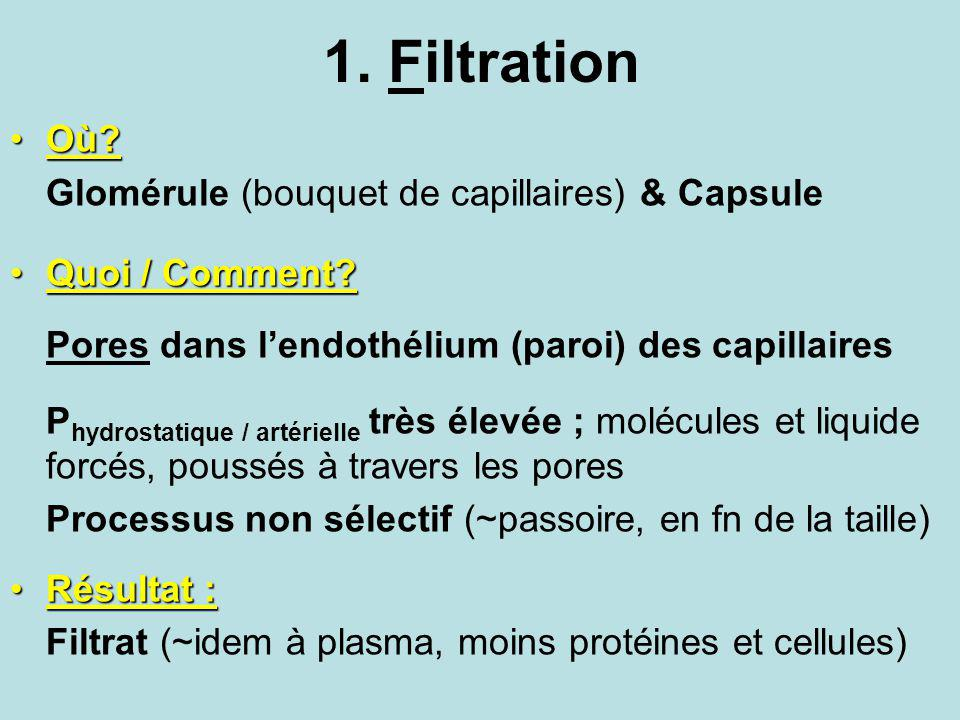 1. Filtration Où?Où? Glomérule (bouquet de capillaires) & Capsule Quoi / Comment?Quoi / Comment? Pores dans lendothélium (paroi) des capillaires P hyd