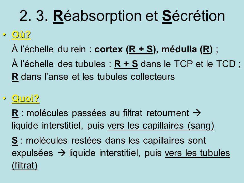 2. 3. Réabsorption et Sécrétion Où?Où? À léchelle du rein : cortex (R + S), médulla (R) ; À léchelle des tubules : R + S dans le TCP et le TCD ; R dan