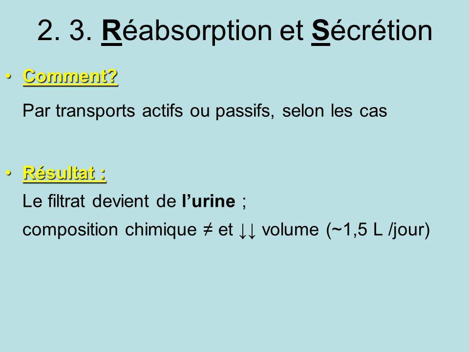 2. 3. Réabsorption et Sécrétion Comment?Comment? Par transports actifs ou passifs, selon les cas Résultat :Résultat : Le filtrat devient de lurine ; c