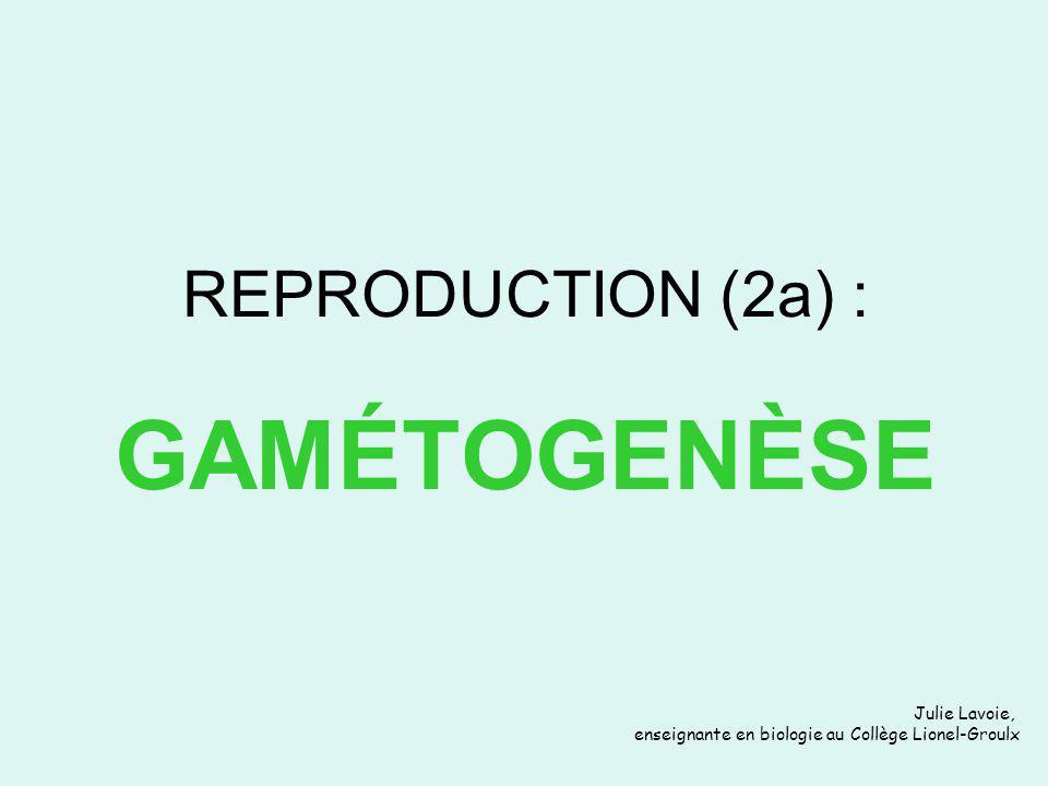 REPRODUCTION (2a) : GAMÉTOGENÈSE Julie Lavoie, enseignante en biologie au Collège Lionel-Groulx