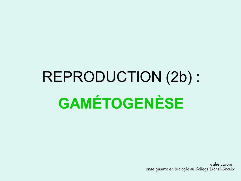Julie Lavoie, enseignante en biologie au Collège Lionel-Groulx REPRODUCTION (2b) : GAMÉTOGENÈSE