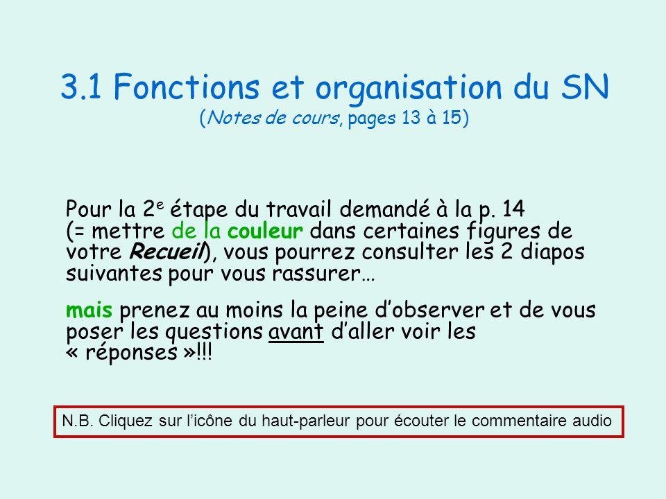 3.1 Fonctions et organisation du SN (Notes de cours, pages 13 à 15) Pour la 2 e étape du travail demandé à la p. 14 (= mettre de la couleur dans certa