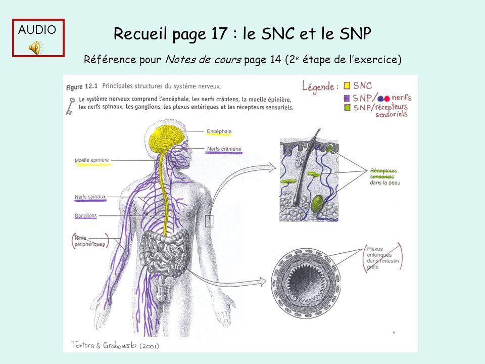 Recueil page 17 : le SNC et le SNP Référence pour Notes de cours page 14 (2 e étape de lexercice) AUDIO