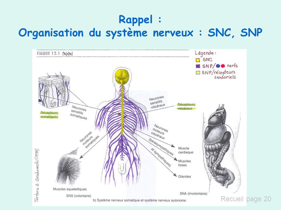 Rappel : Organisation du système nerveux : SNC, SNP Recueil page 20