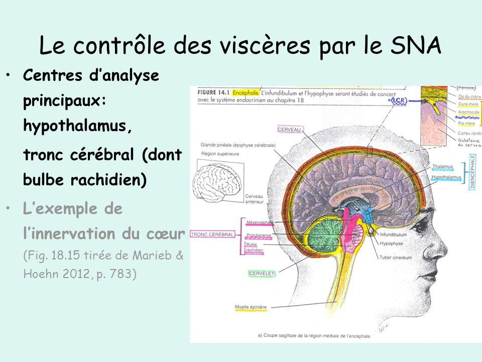 Le contrôle des viscères par le SNA Centres danalyse principaux: hypothalamus, tronc cérébral (dont bulbe rachidien) Lexemple de linnervation du cœur (Fig.