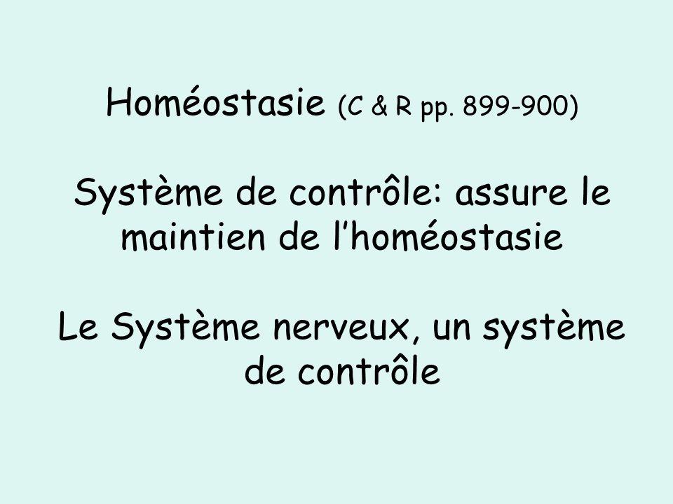 Homéostasie (C & R pp. 899-900) Système de contrôle: assure le maintien de lhoméostasie Le Système nerveux, un système de contrôle