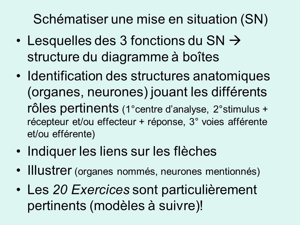 Schématiser une mise en situation (SN) Lesquelles des 3 fonctions du SN structure du diagramme à boîtes Identification des structures anatomiques (organes, neurones) jouant les différents rôles pertinents (1°centre danalyse, 2°stimulus + récepteur et/ou effecteur + réponse, 3° voies afférente et/ou efférente) Indiquer les liens sur les flèches Illustrer (organes nommés, neurones mentionnés) Les 20 Exercices sont particulièrement pertinents (modèles à suivre)!