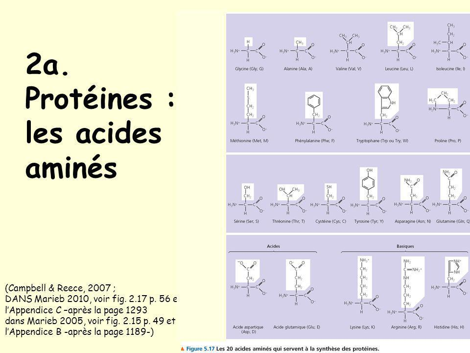 2b.Protéines : structure (Campbell & Reece, 2007 ; dans Marieb 2005, voir fig.