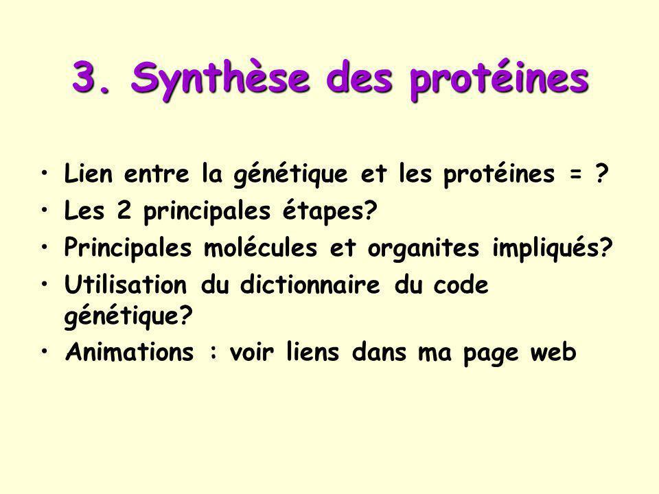3.Synthèse des protéines Lien entre la génétique et les protéines = .