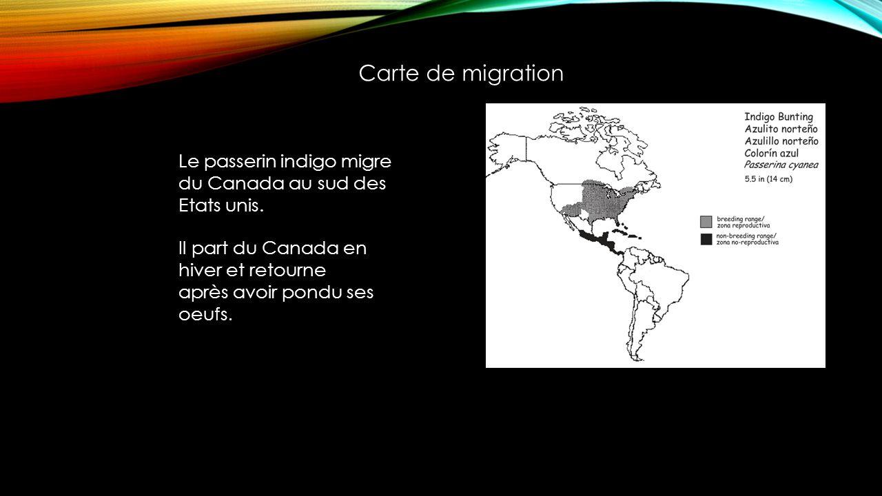 Carte de migration Le passerin indigo migre du Canada au sud des Etats unis.