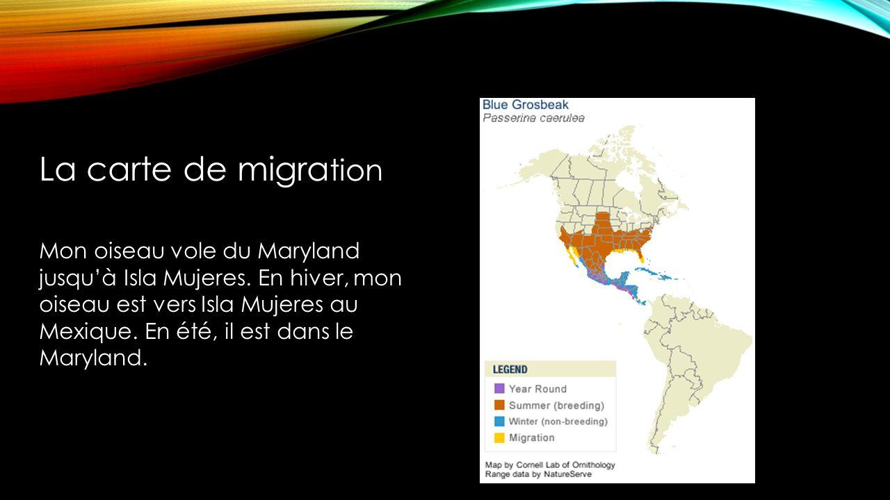 Mon oiseau vole du Maryland jusquà Isla Mujeres.