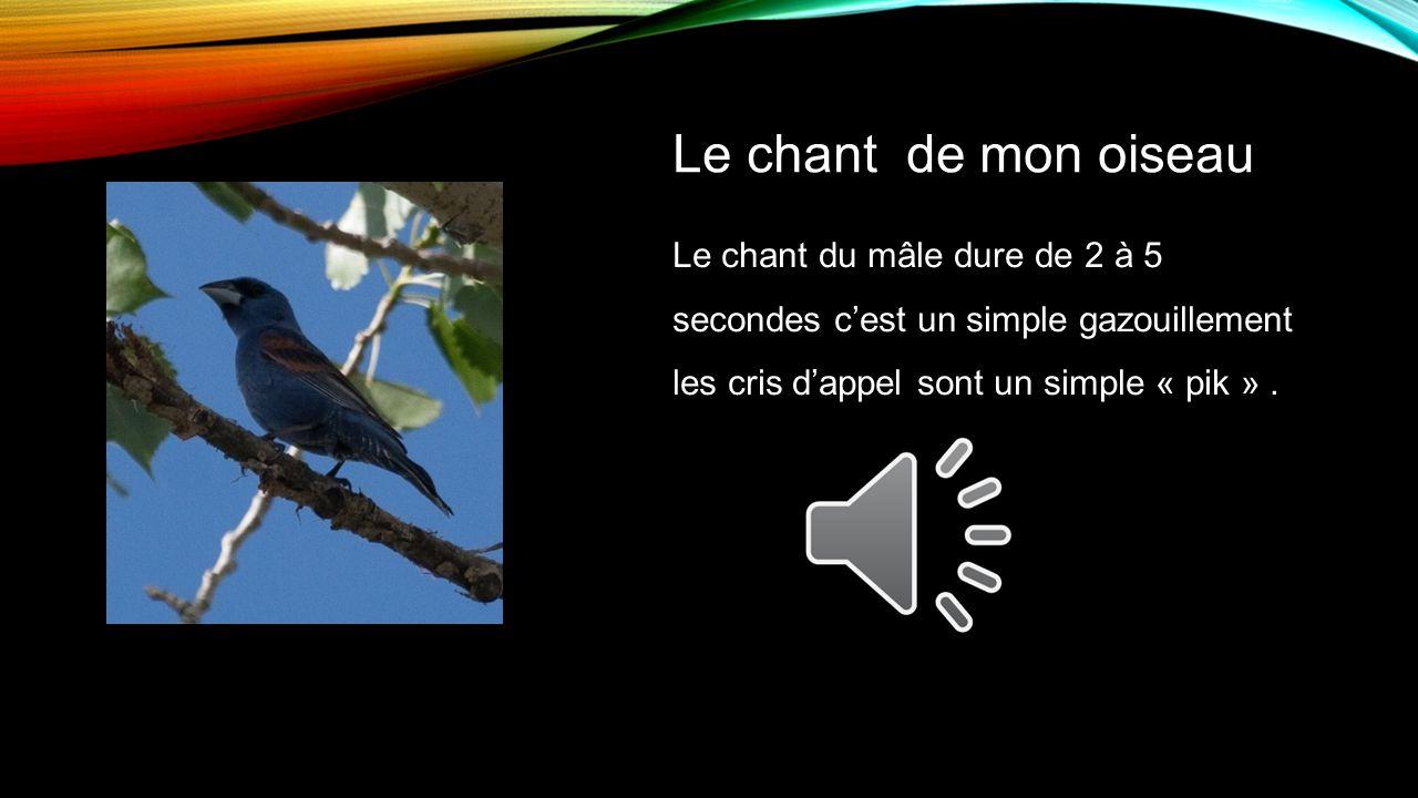 Le chant du mâle dure de 2 à 5 secondes cest un simple gazouillement les cris dappel sont un simple « pik ».