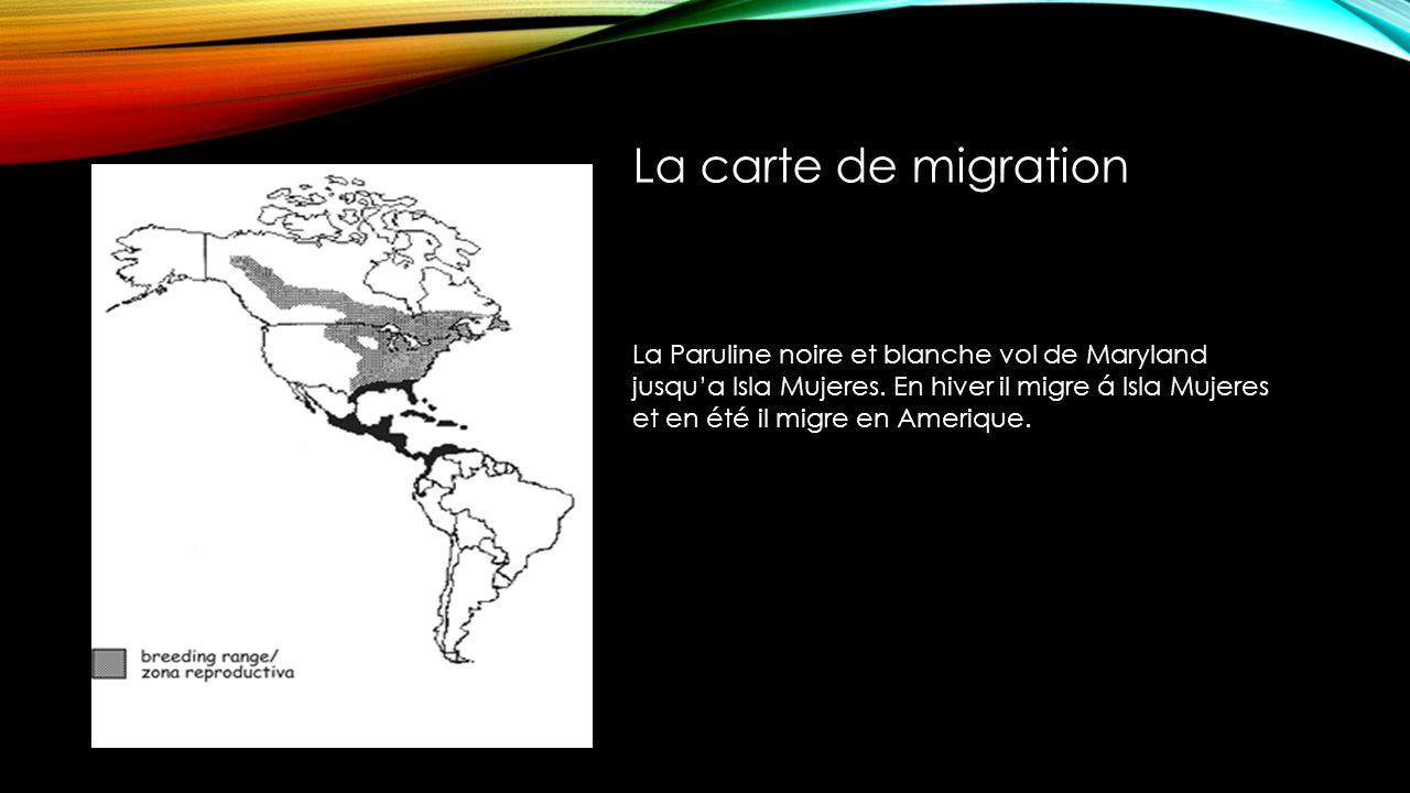 La carte de migration La Paruline noire et blanche vol de Maryland jusqua Isla Mujeres.
