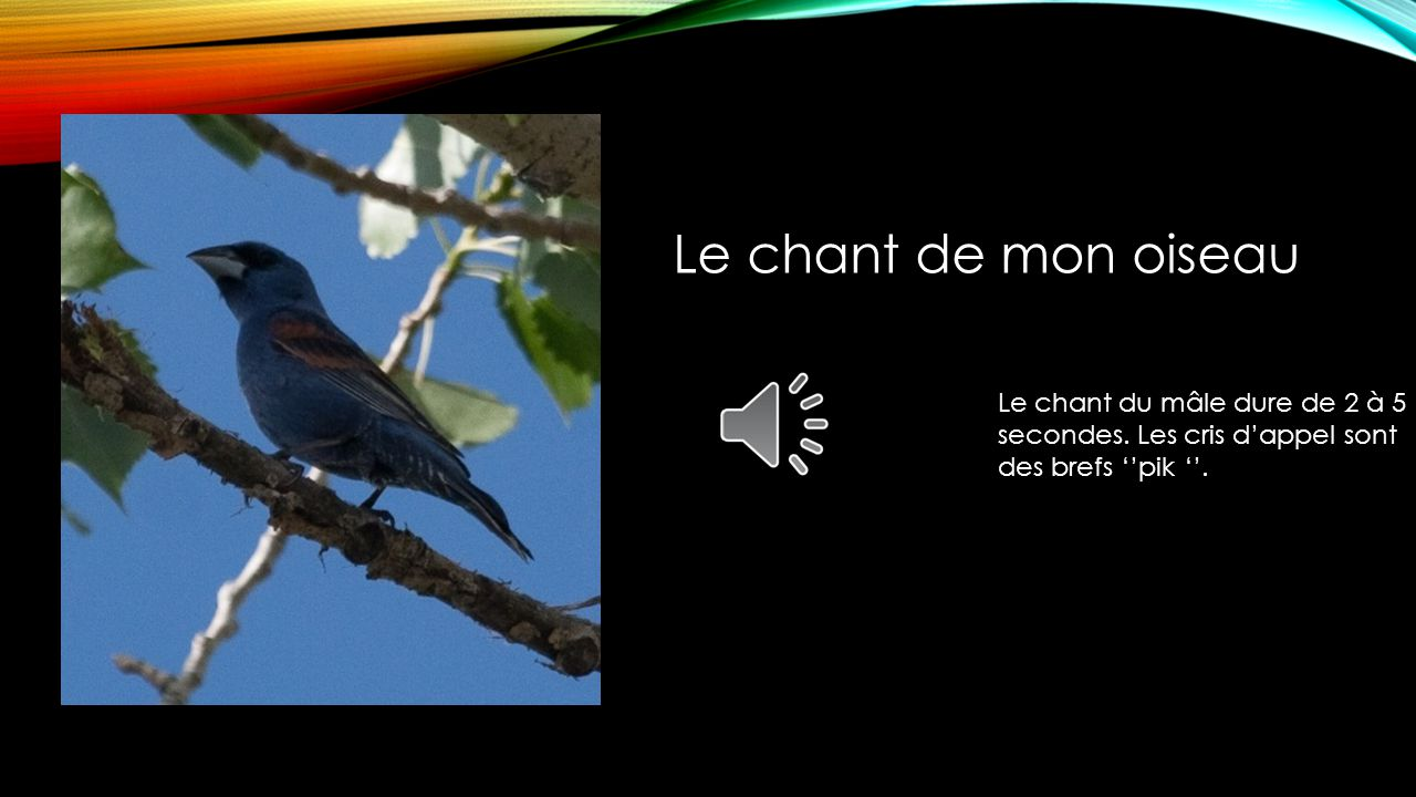 Mon oiseau vole du Maryland vers Isla Mujeres. En hiver, mon oiseau est à Isla Mujeres au Mexique. En, été il est dans le Maryland. La carte de migrat