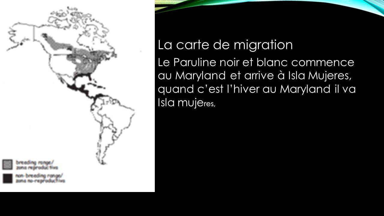 La carte de migration Le Paruline noir et blanc commence au Maryland et arrive à Isla Mujeres, quand cest lhiver au Maryland il va Isla muje res,