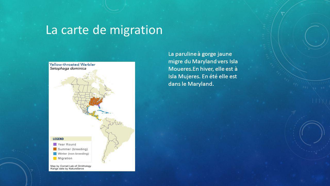 La carte de migration La paruline à gorge jaune migre du Maryland vers Isla Moueres.En hiver, elle est à Isla Mujeres.