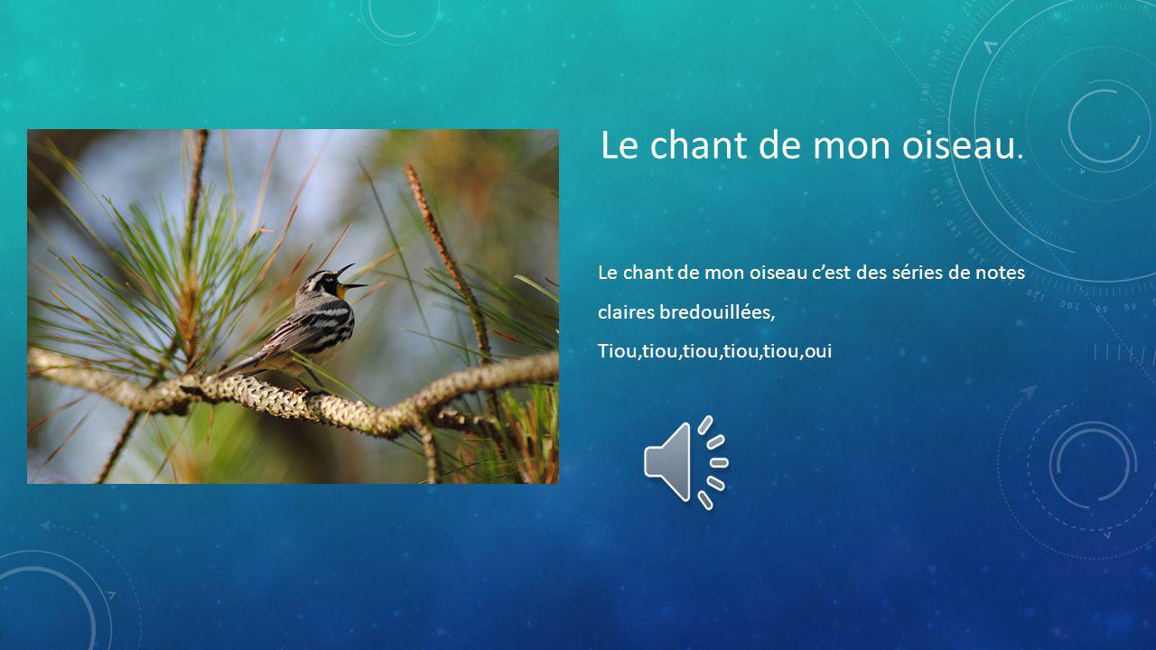 Le chant de mon oiseau.