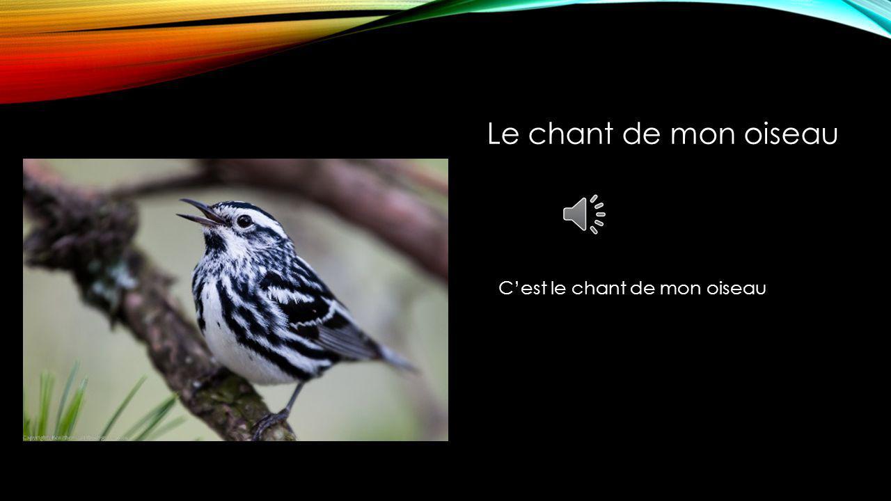 Cest le chant de mon oiseau Le chant de mon oiseau