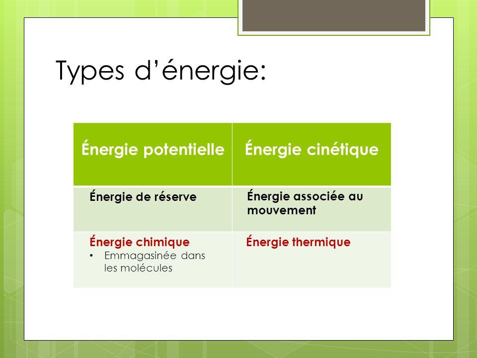 Types dénergie: Énergie potentielleÉnergie cinétique Énergie de réserve Énergie chimique Emmagasinée dans les molécules Énergie associée au mouvement