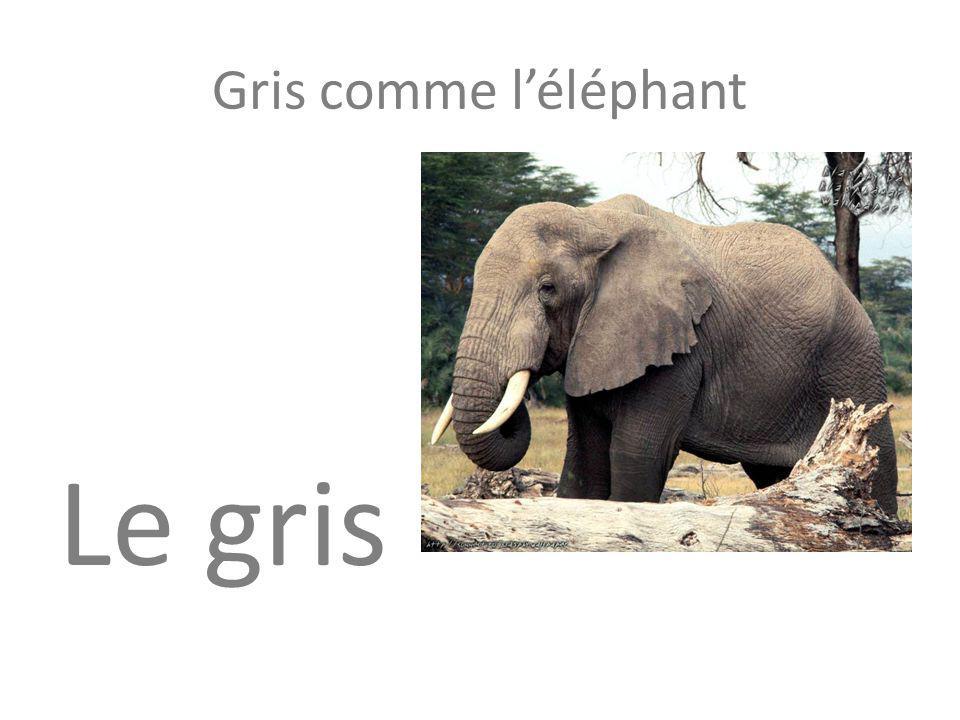 Gris comme léléphant Le gris
