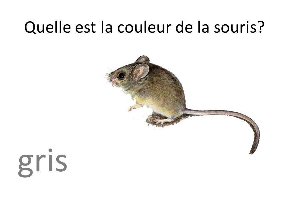 Quelle est la couleur de la souris? gris