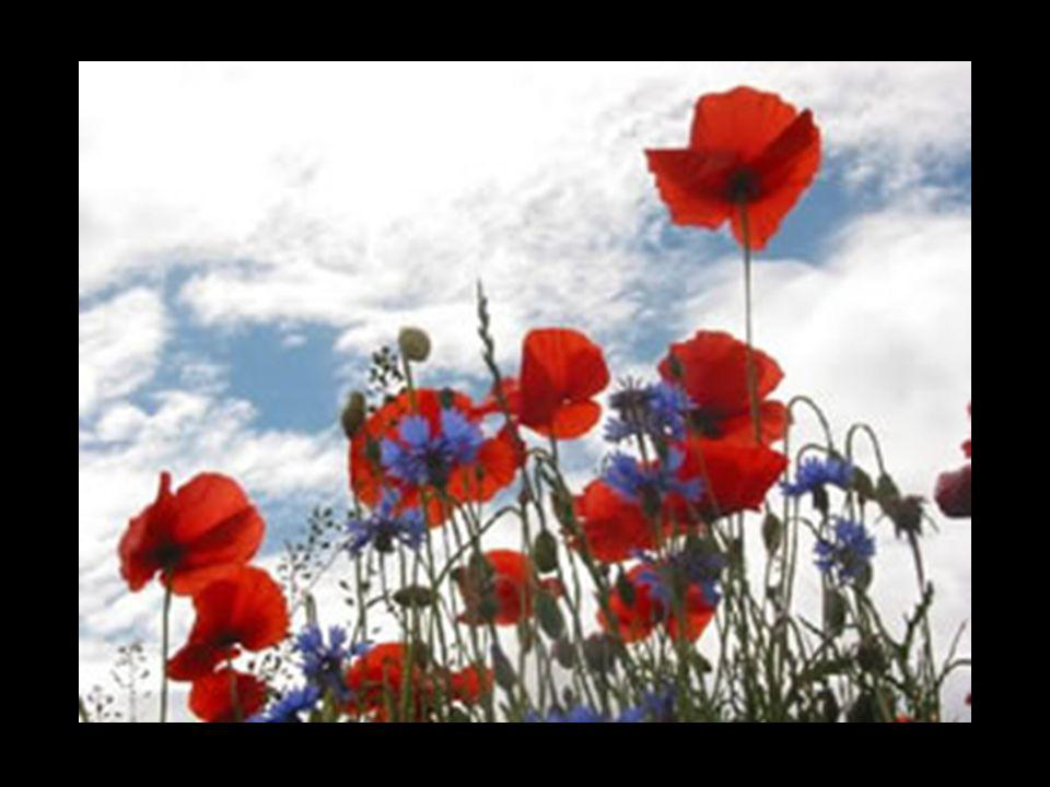 « Ces fleurs Visibles, Tenaces Et modestes Me semblent Emblématiques De la Vie » Henry Bauchau