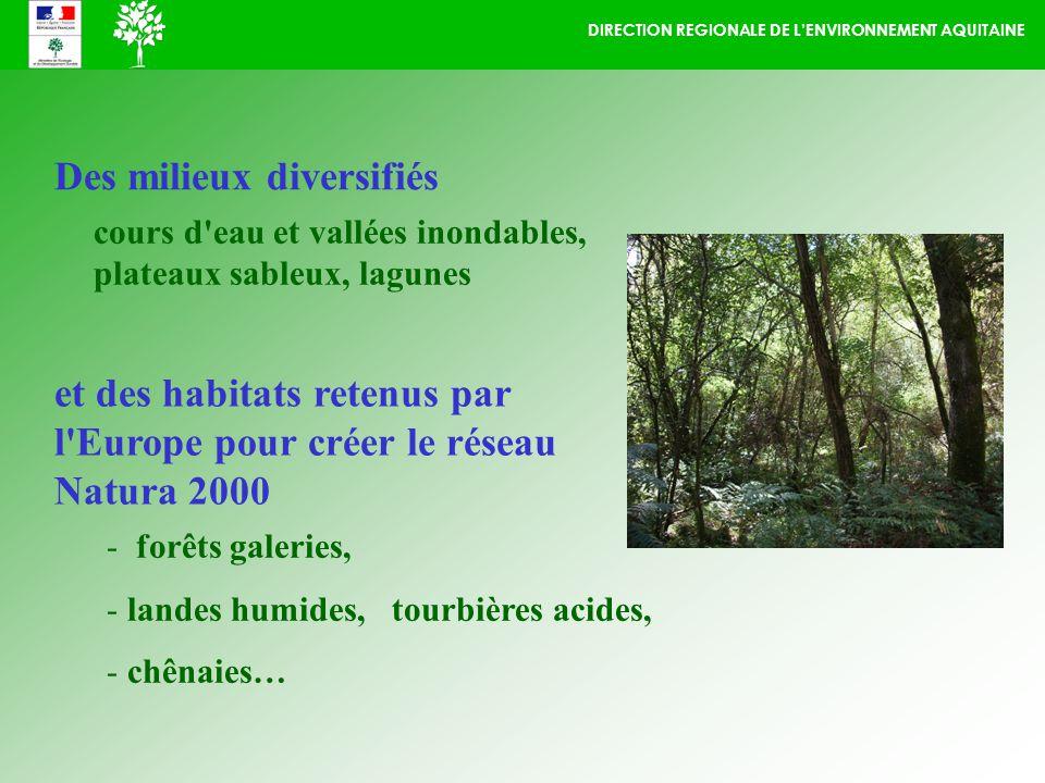 DIRECTION REGIONALE DE LENVIRONNEMENT AQUITAINE Des milieux diversifiés et des habitats retenus par l Europe pour créer le réseau Natura 2000 - forêts galeries, - landes humides, tourbières acides, - chênaies… cours d eau et vallées inondables, plateaux sableux, lagunes