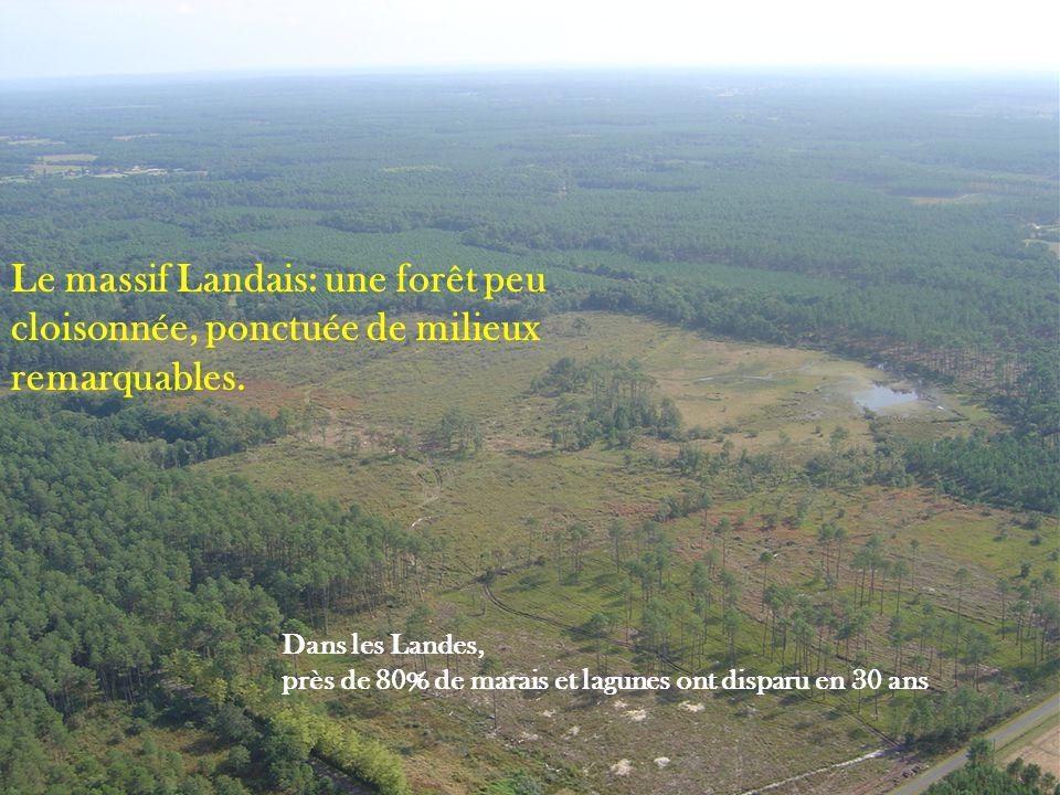 Le massif Landais: une forêt peu cloisonnée, ponctuée de milieux remarquables. Dans les Landes, près de 80% de marais et lagunes ont disparu en 30 ans