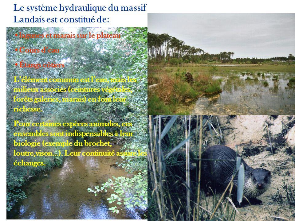 Le système hydraulique du massif Landais est constitué de: lagunes et marais sur le plateau Cours deau Étangs côtiers Lélément commun est leau, mais l