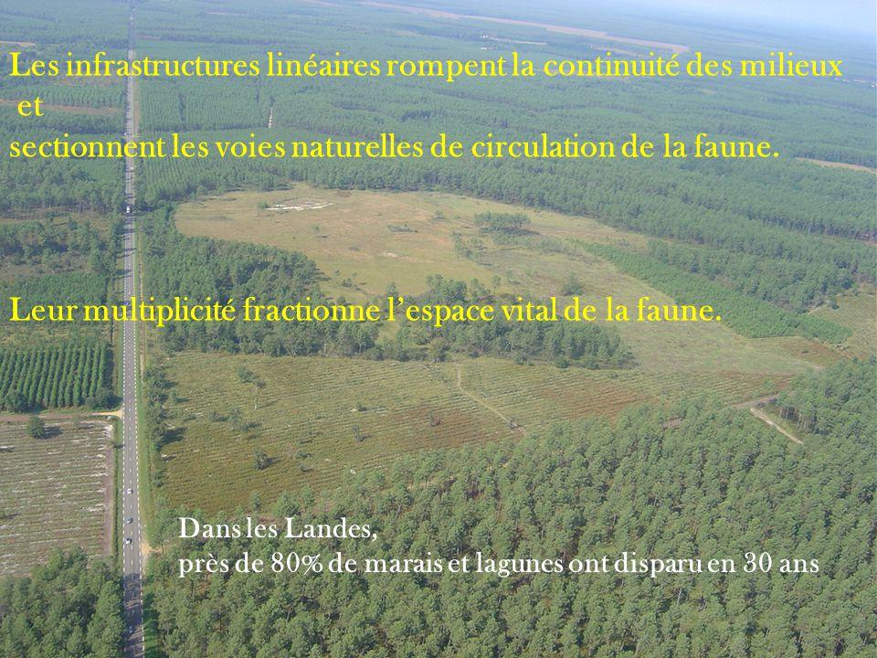 Les infrastructures linéaires rompent la continuité des milieux et sectionnent les voies naturelles de circulation de la faune. Leur multiplicité frac